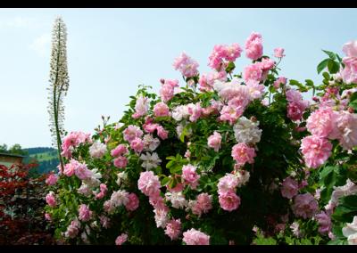 Fleurs (15)