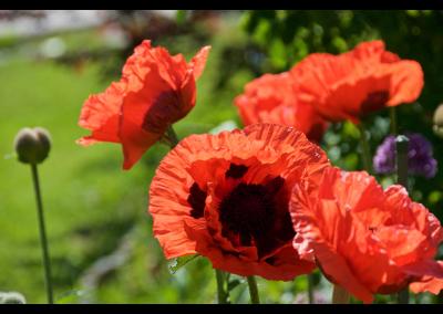 Fleurs (3)