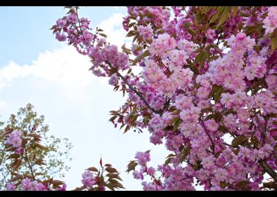 Fleurs (8)